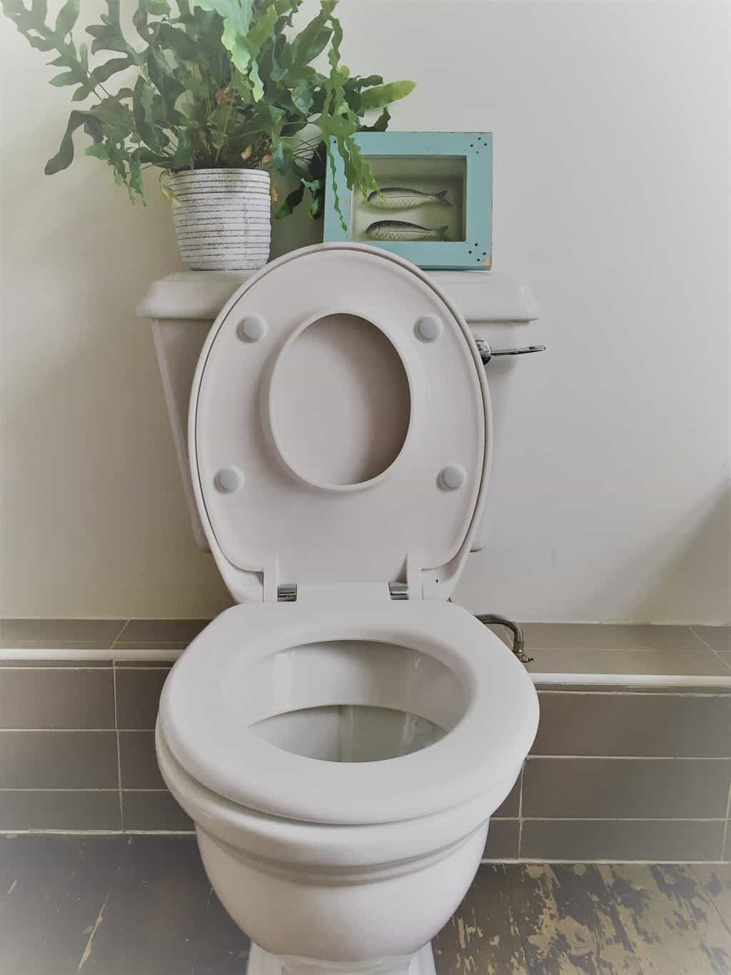 Family Seat review: Taking the stress out of toilet ...