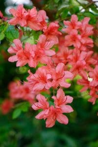 low maintenance plants and shrubs