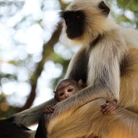 animals teach us about parenting