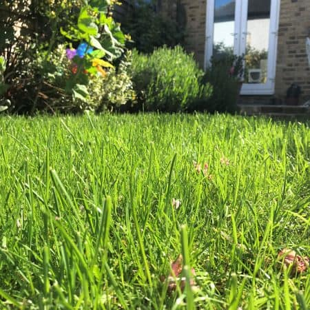 bring your lawn back to life